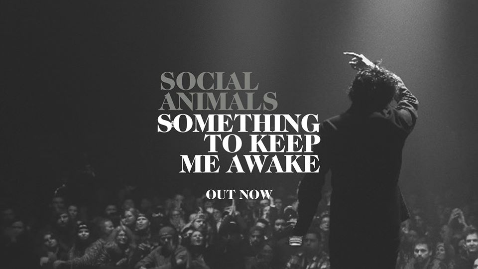 Social Animals New Single 'Something to Keep Me Awake'